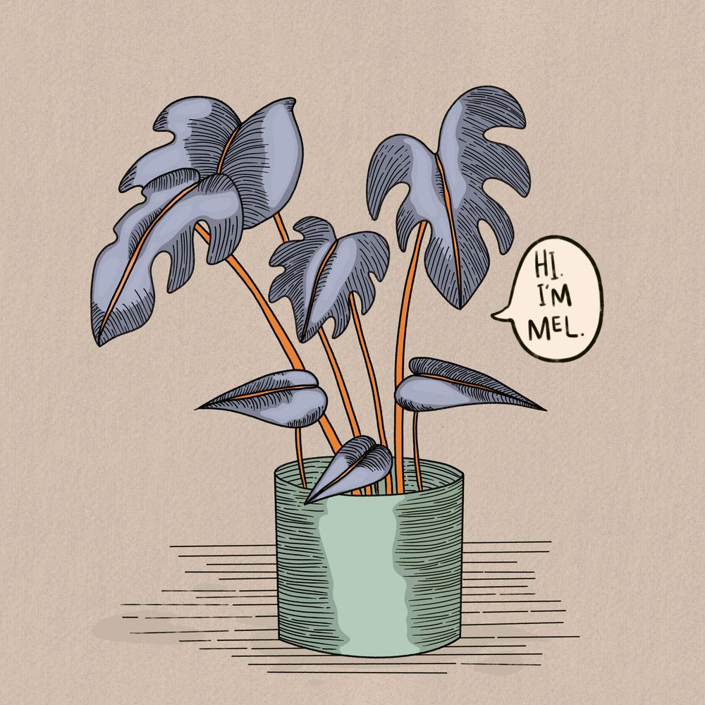 Mel The House Plant - image 1 - student project