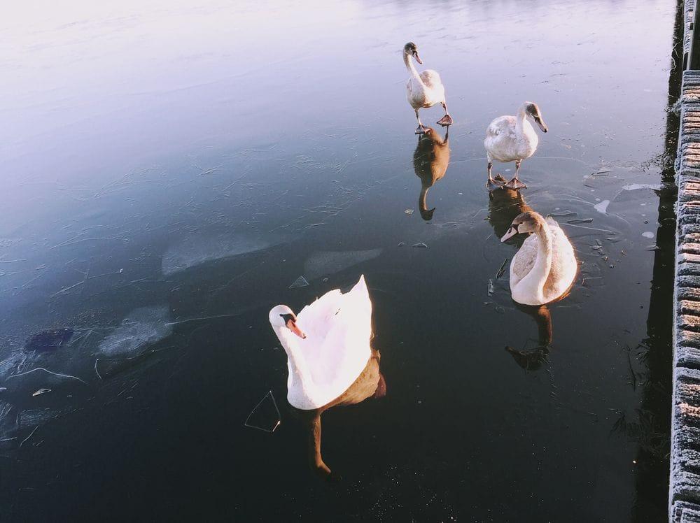 frozen lake at sunrise - image 5 - student project