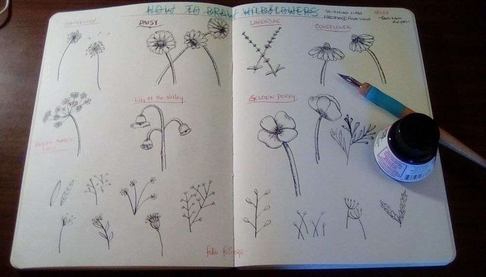 Wildflower practice and meadow - image 1 - student project