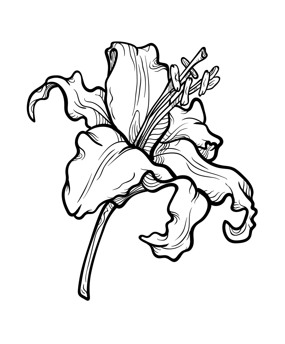 Lily - image 1 - student project