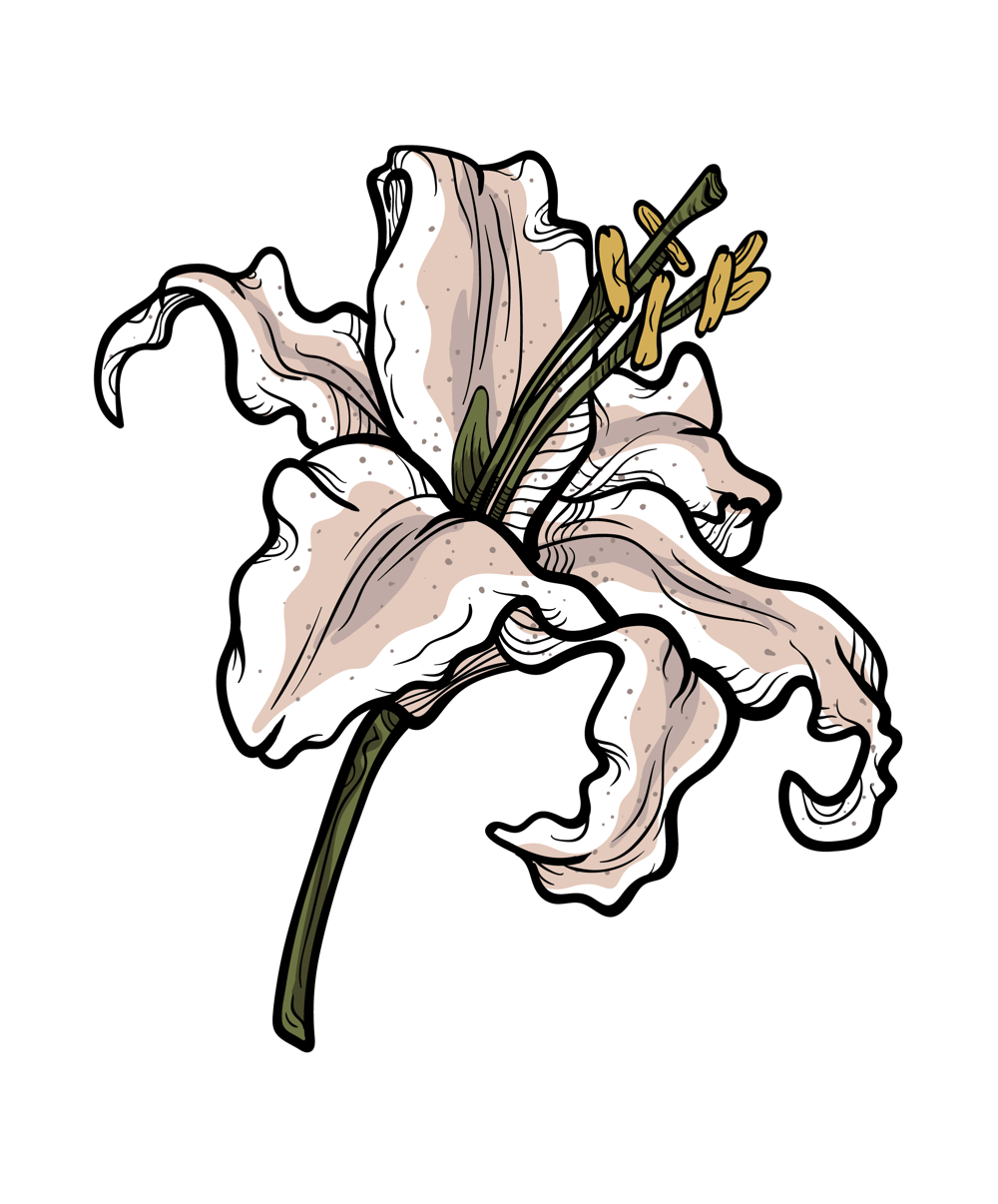 Lily - image 2 - student project