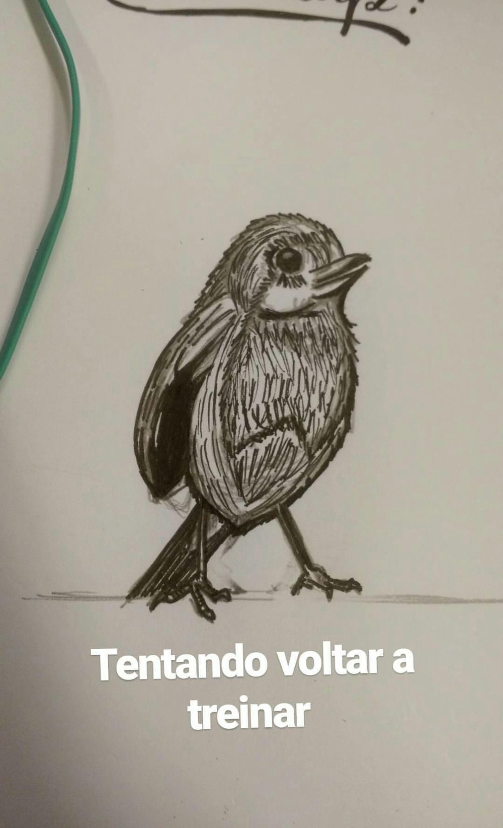 training draw with a different bird  - image 2 - student project