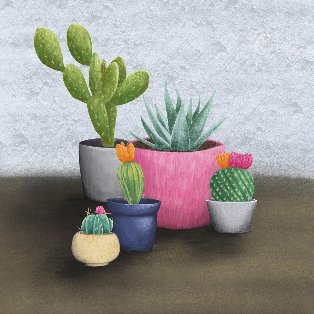 Textured Cacti in Pots - image 1 - student project