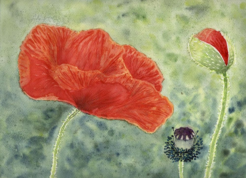 Loose poppies in different styles - image 1 - student project