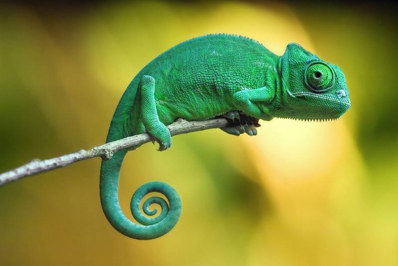 Chameleon Mark - image 1 - student project