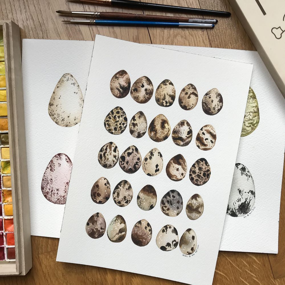 Bird eggs in watercolour - image 5 - student project