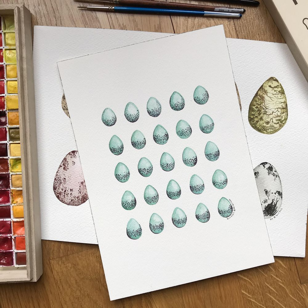 Bird eggs in watercolour - image 2 - student project