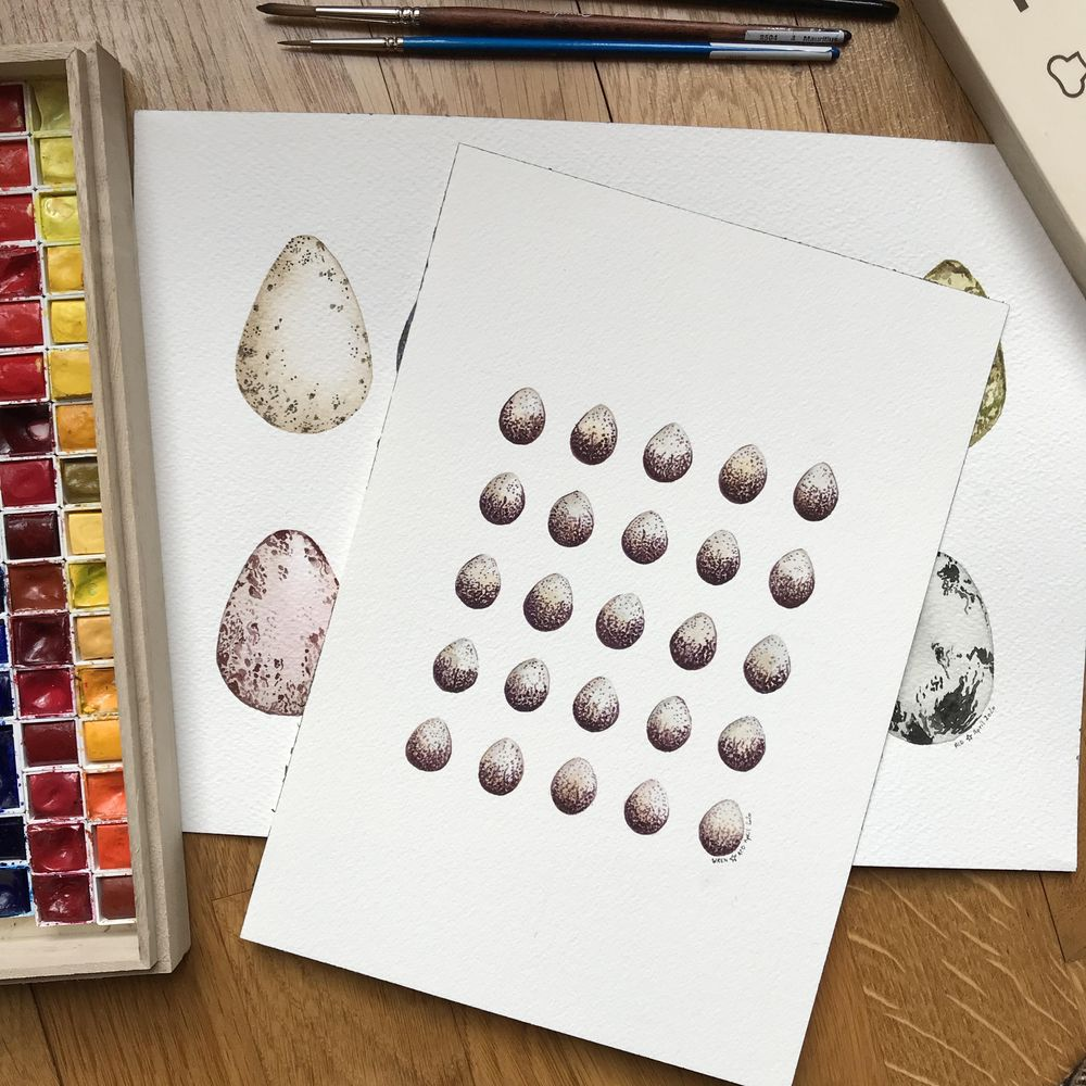 Bird eggs in watercolour - image 1 - student project