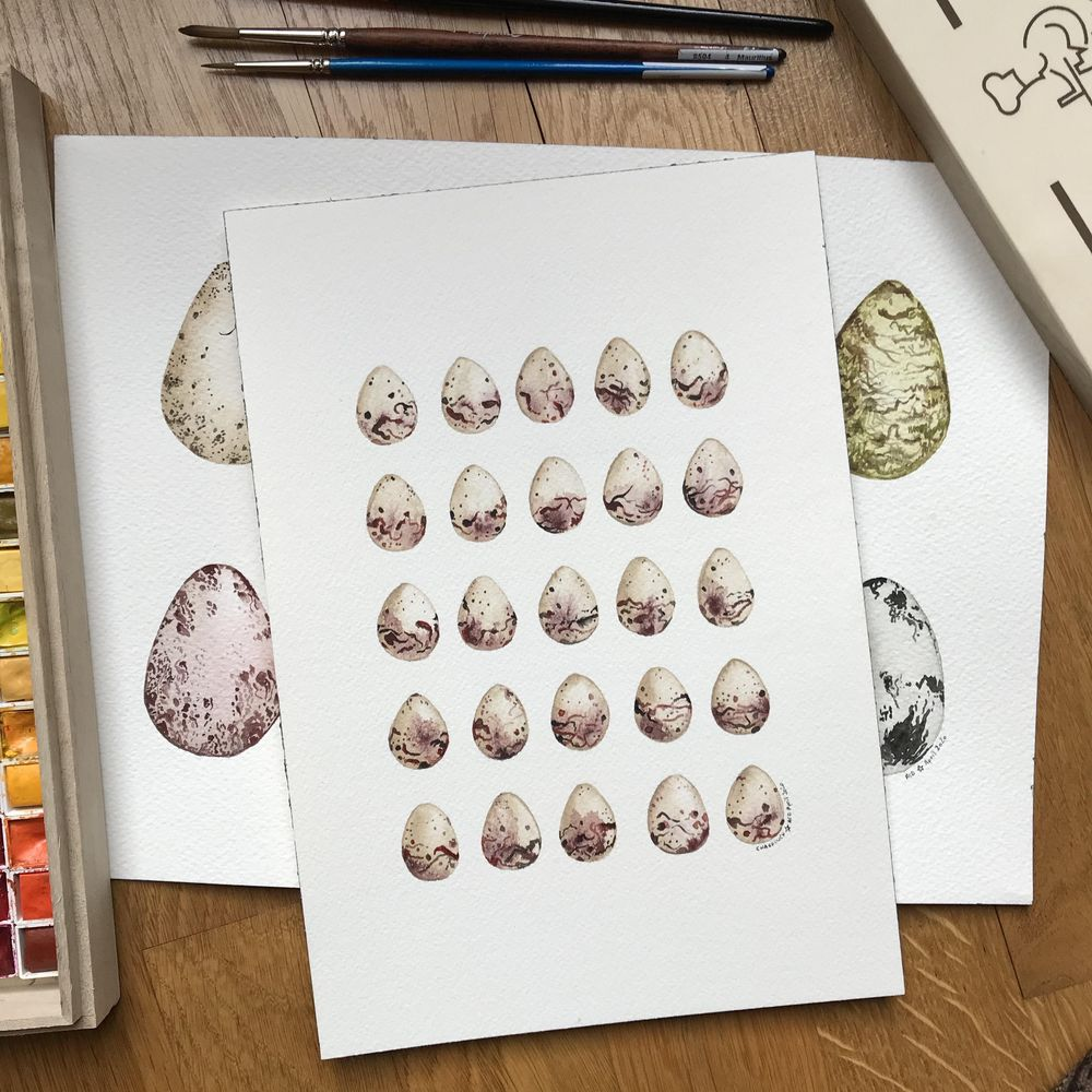 Bird eggs in watercolour - image 4 - student project