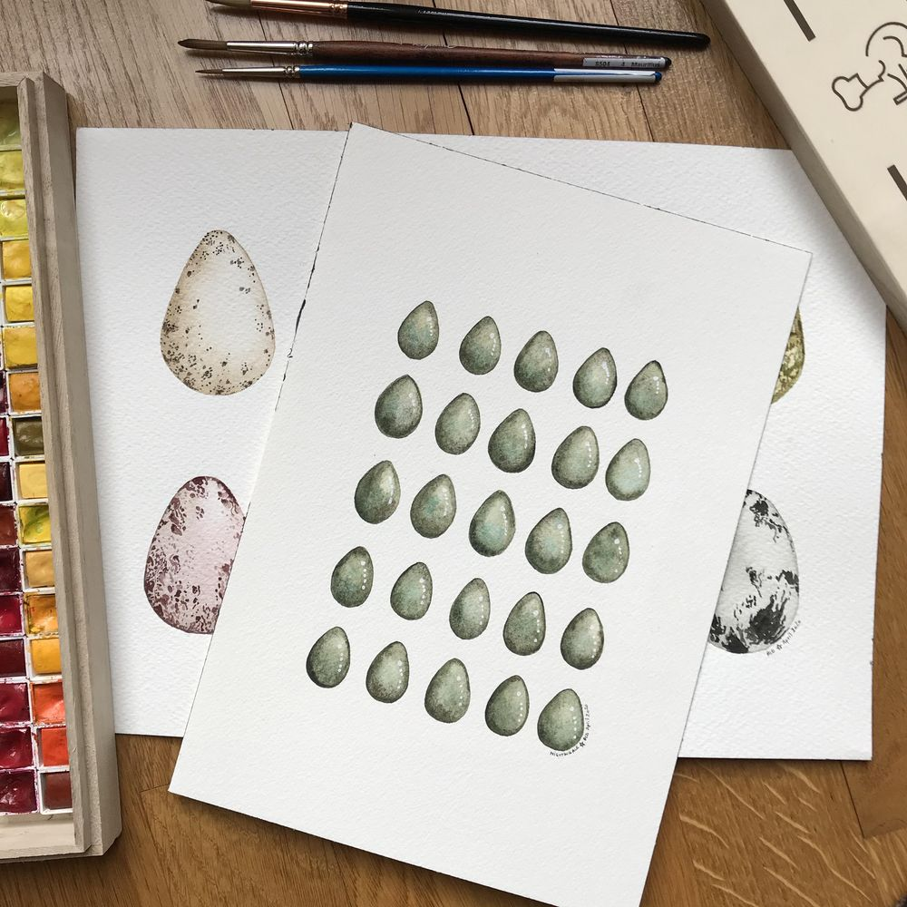 Bird eggs in watercolour - image 3 - student project