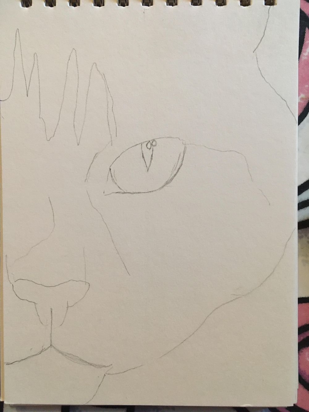 Kitten - image 1 - student project