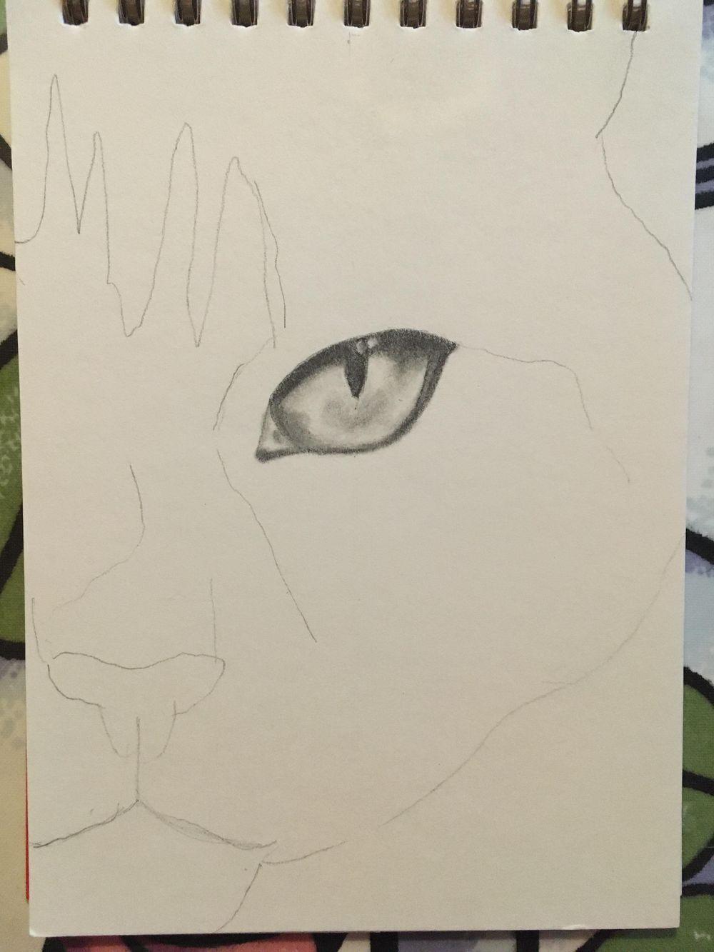 Kitten - image 2 - student project