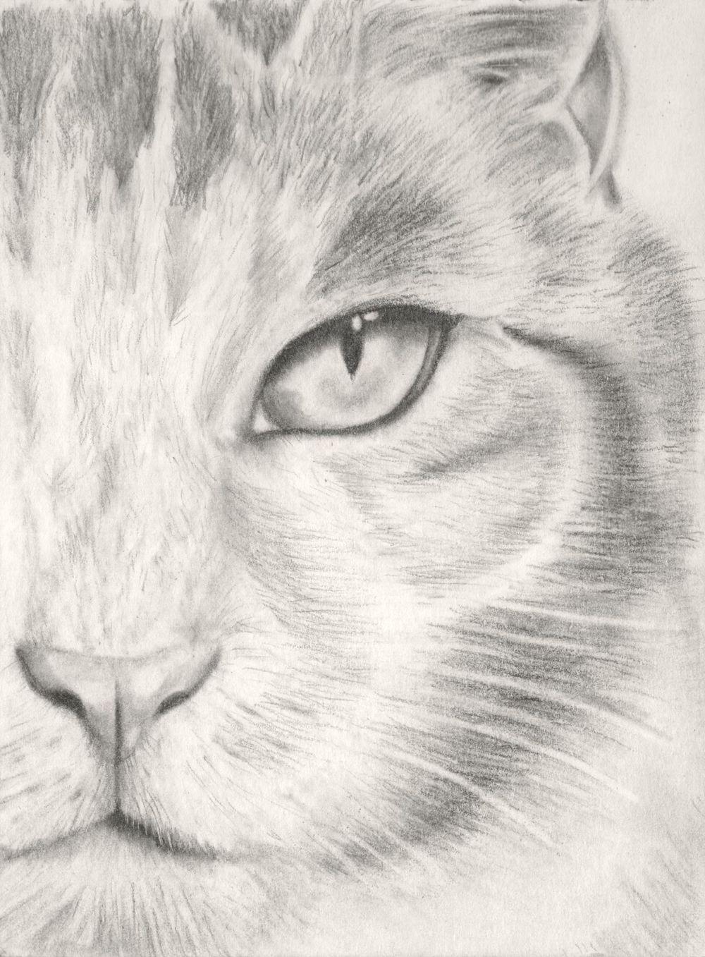 Kitten - image 4 - student project