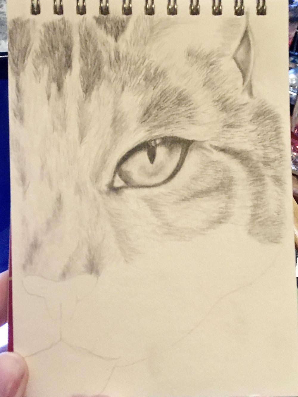 Kitten - image 3 - student project