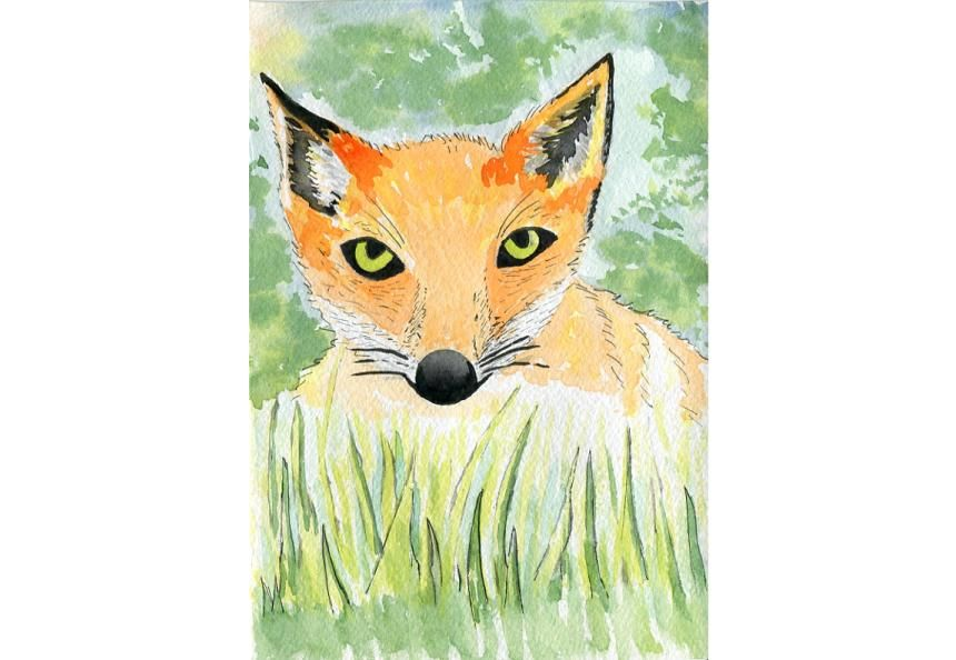 Fox in the grass - image 1 - student project