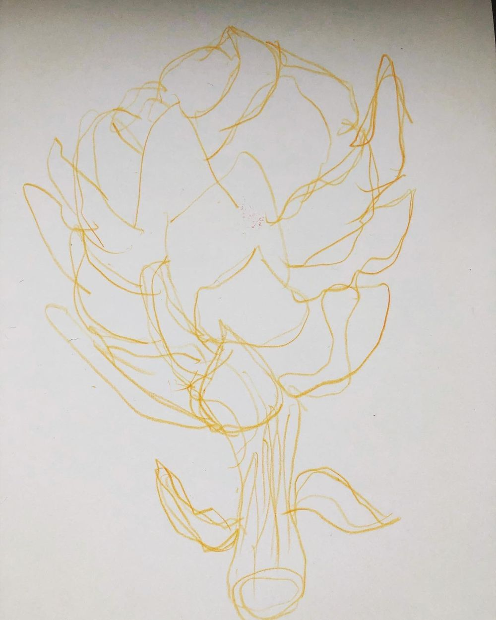 Exploration - artichoke drawings - image 2 - student project