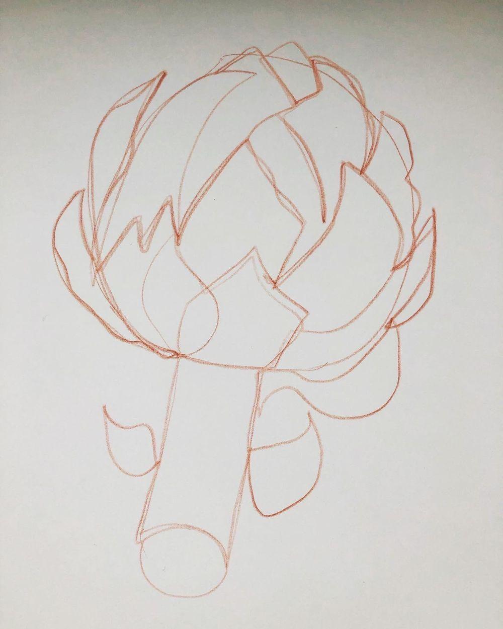 Exploration - artichoke drawings - image 4 - student project
