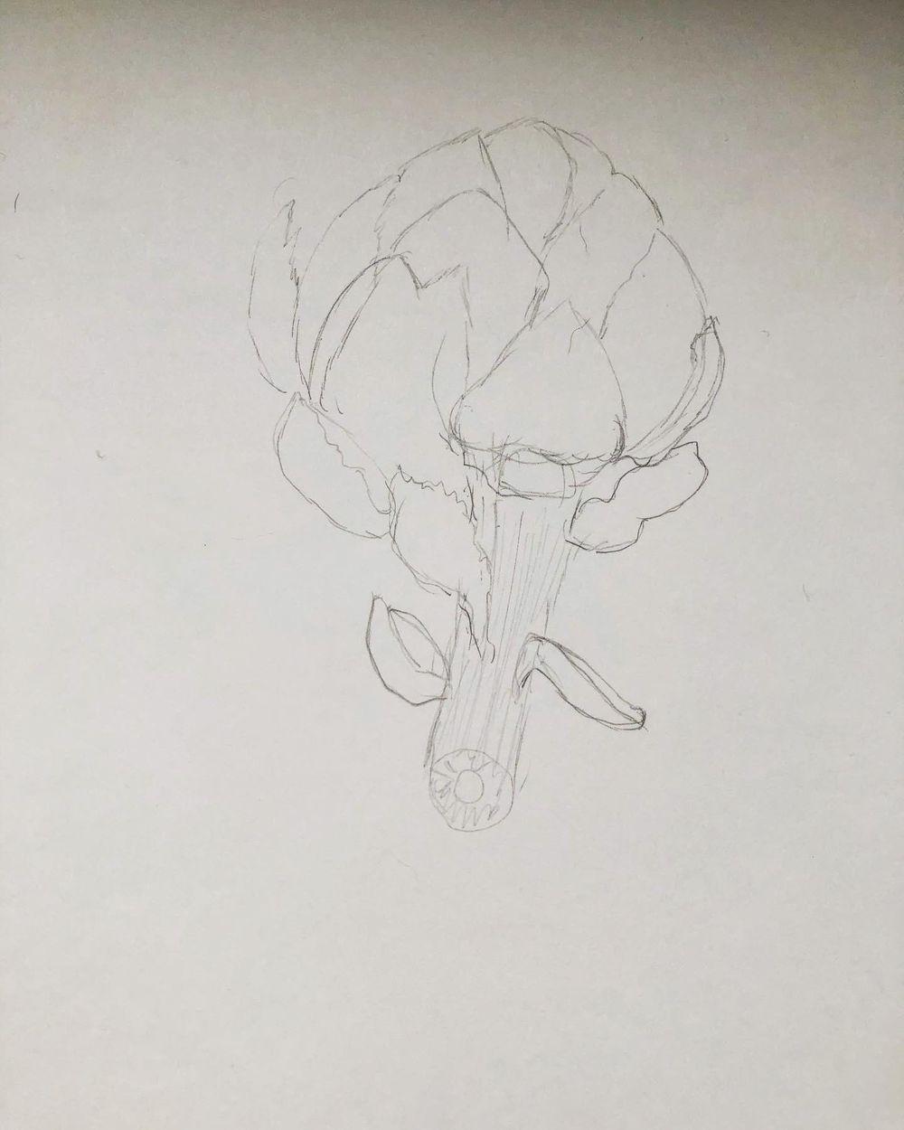 Exploration - artichoke drawings - image 5 - student project
