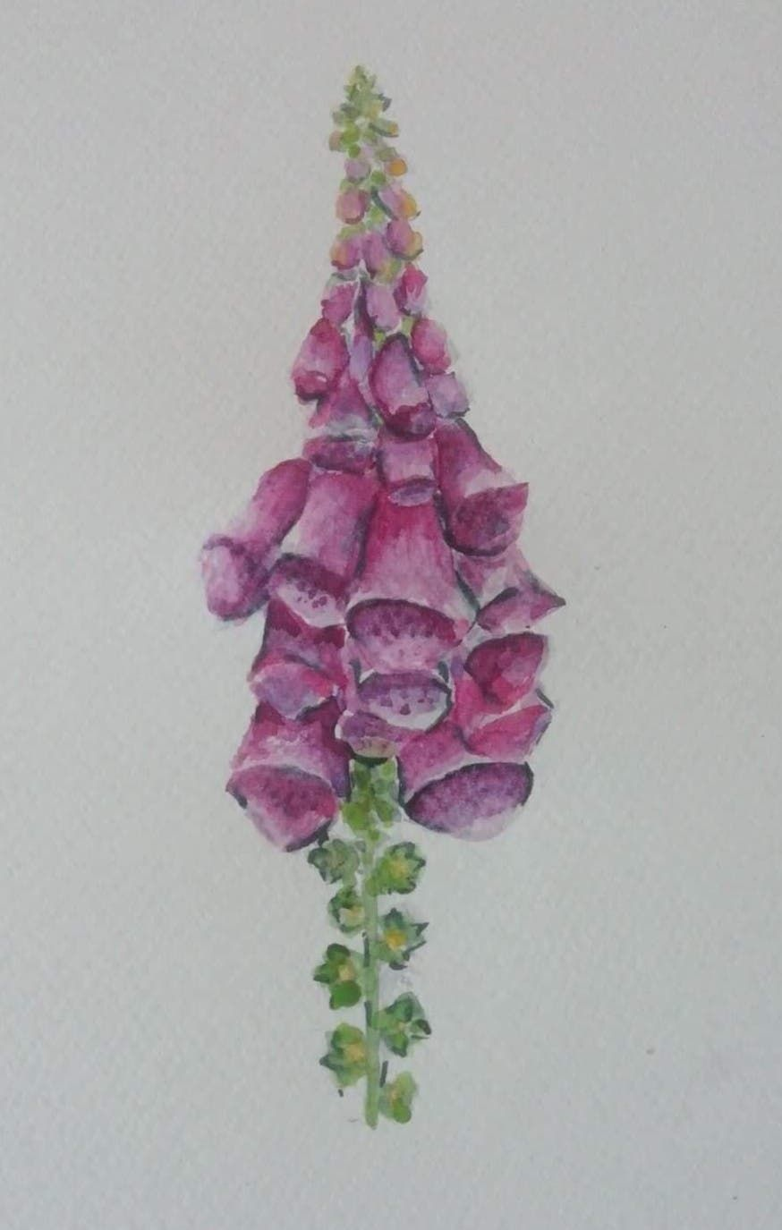 Watercolour in the Woods - Foxgloves - image 1 - student project