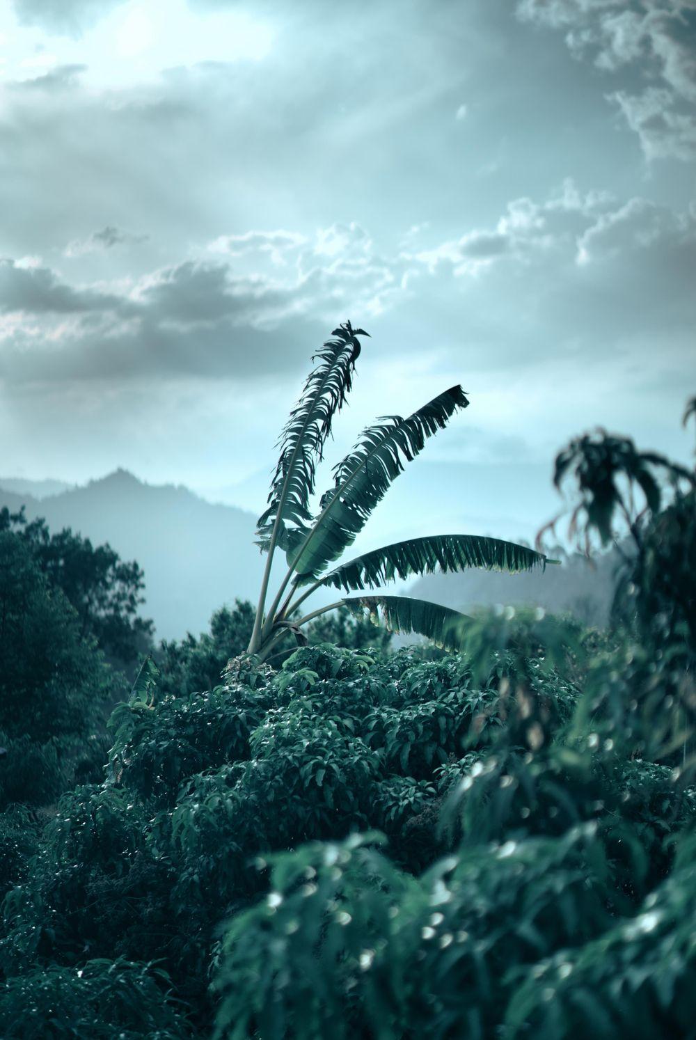 Landscape-Banana tree - image 1 - student project