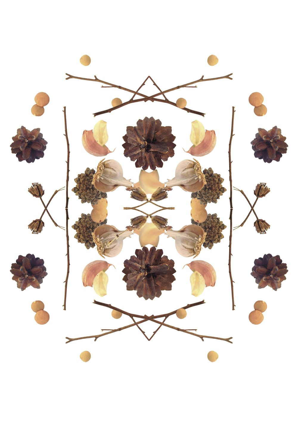 branches, garlic, cones and lentil - image 2 - student project