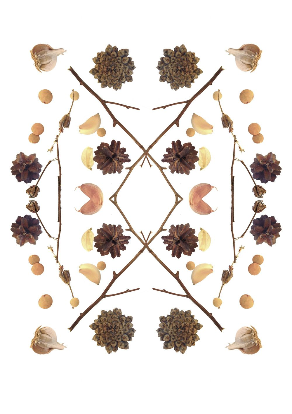 branches, garlic, cones and lentil - image 7 - student project