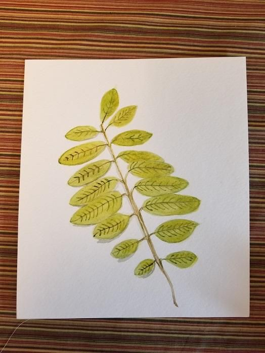 Evelyn's Botanical Watercolors - image 2 - student project