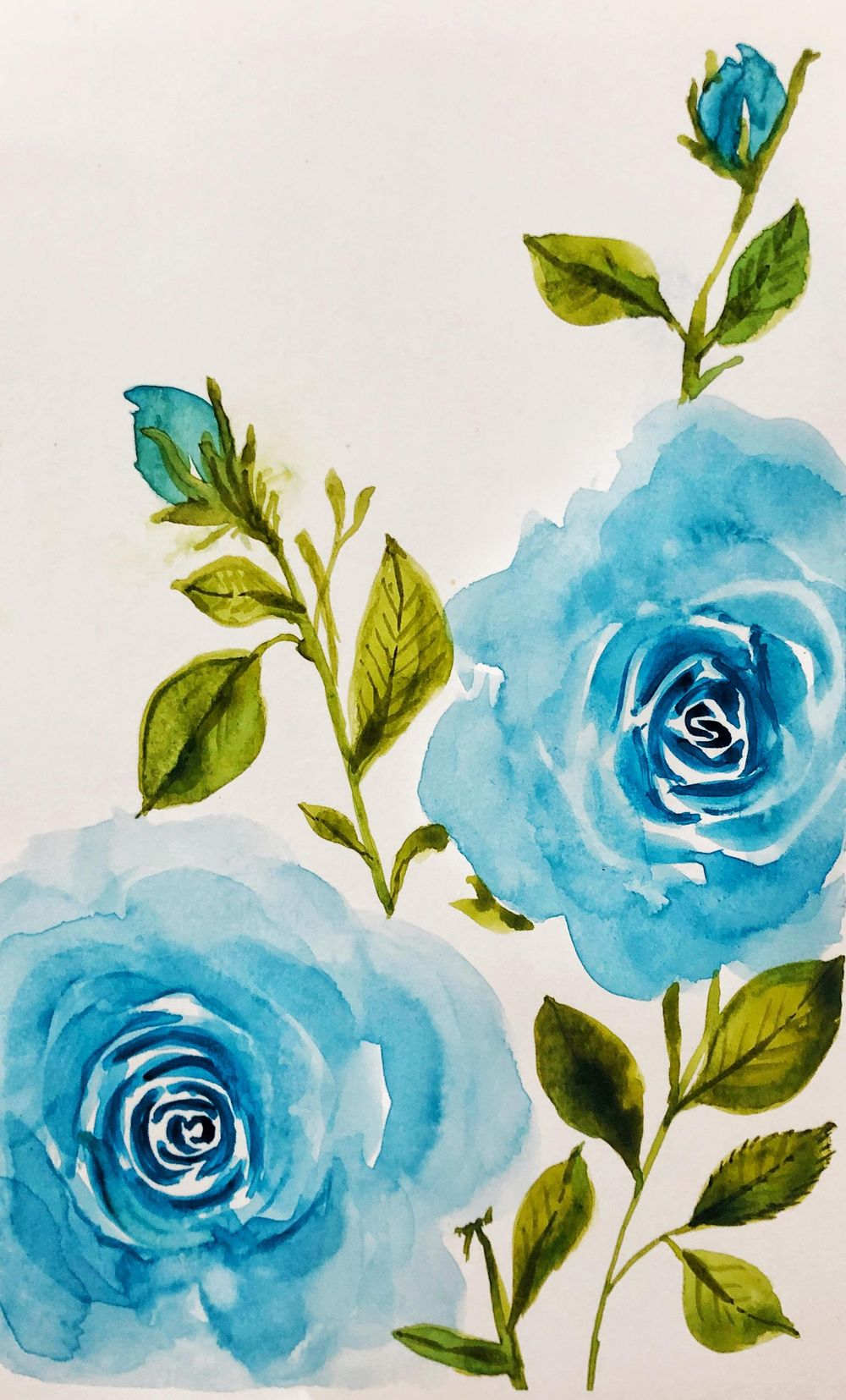 Beautiful roses. - image 1 - student project