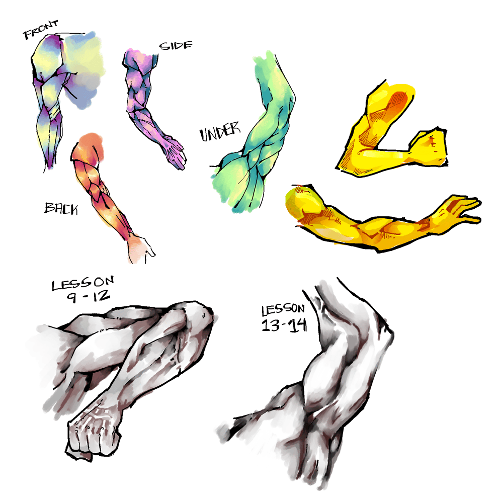 arm muscles - image 1 - student project