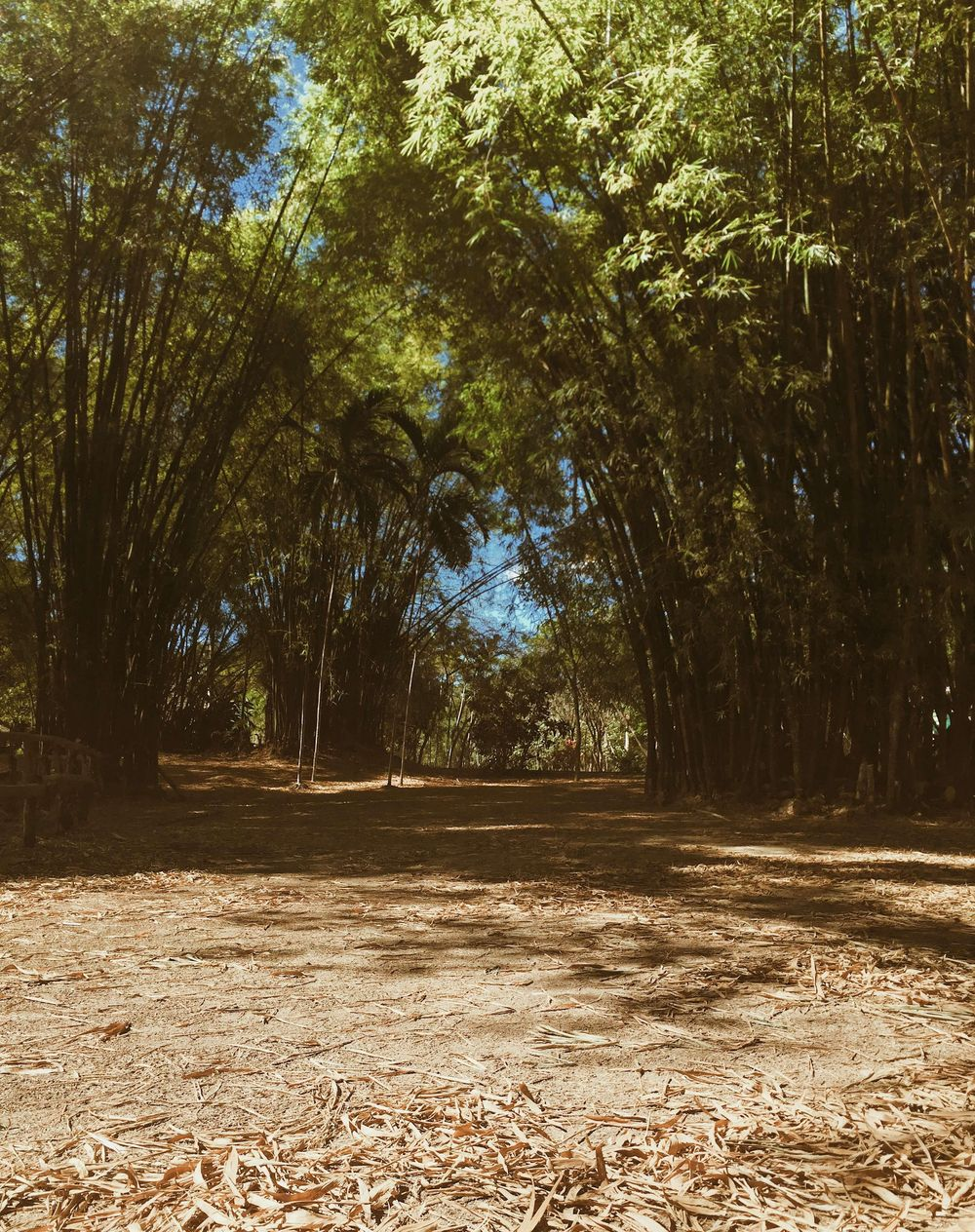 National Botanical Garden - image 1 - student project