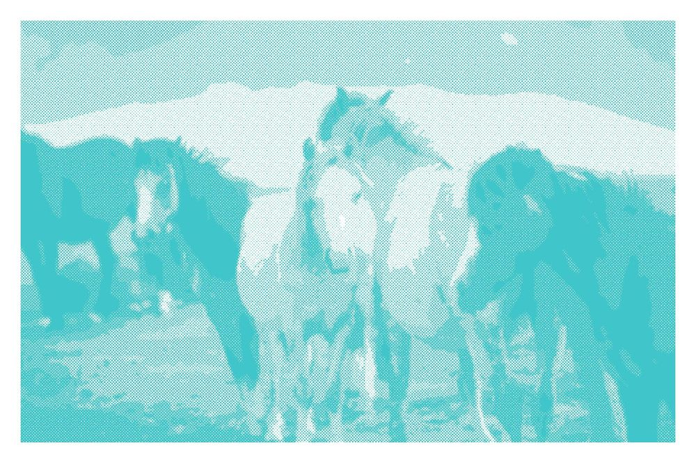 Horses - image 1 - student project