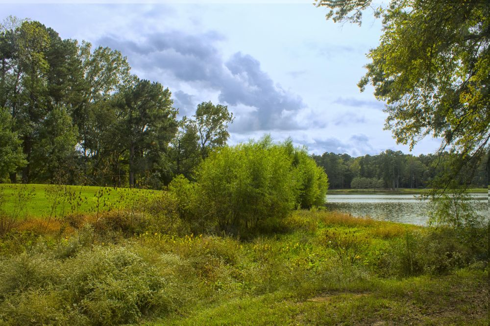 Cooper Creek Park Photography Project - image 2 - student project