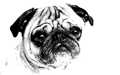 Pack of Pug Postcards - image 1 - student project