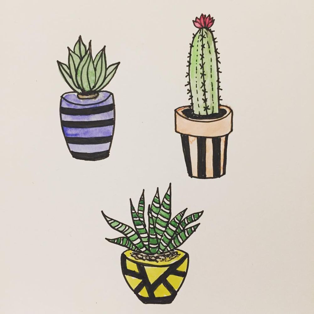 Cacti & Succulents  - image 2 - student project