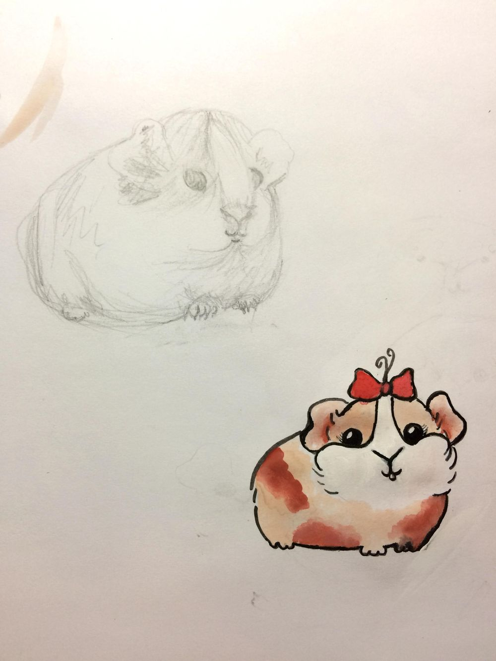Guinea Pig & Killer Whale Cuties - image 1 - student project