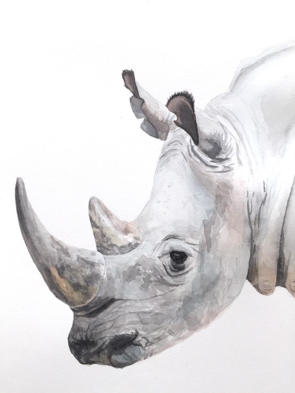 Watercolor Rhino - image 2 - student project