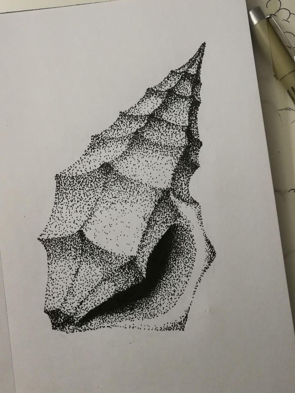 Seashell - image 3 - student project