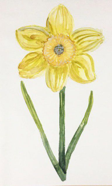 Spring Flowers in Watercolor: explore different Watercolor Styles - image 4 - student project