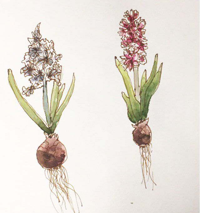 Spring Flowers in Watercolor: explore different Watercolor Styles - image 2 - student project