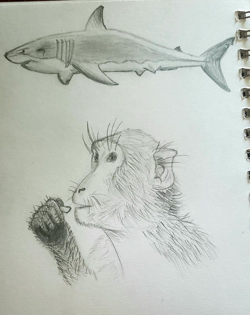 Things I Never Draw - image 1 - student project