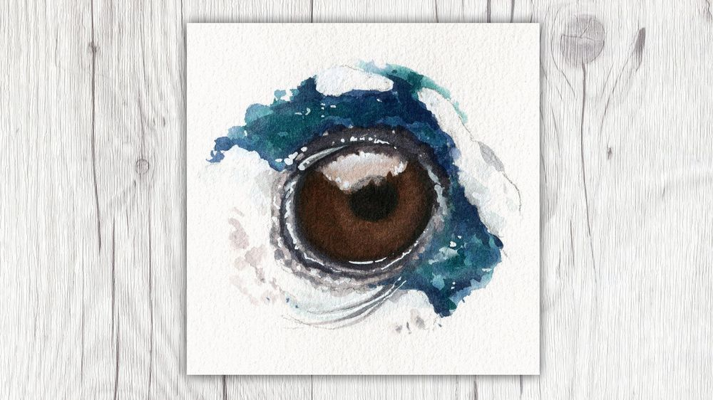 My Animal Eyes - image 3 - student project