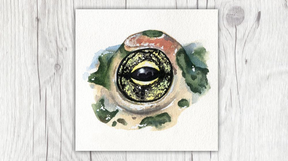 My Animal Eyes - image 5 - student project