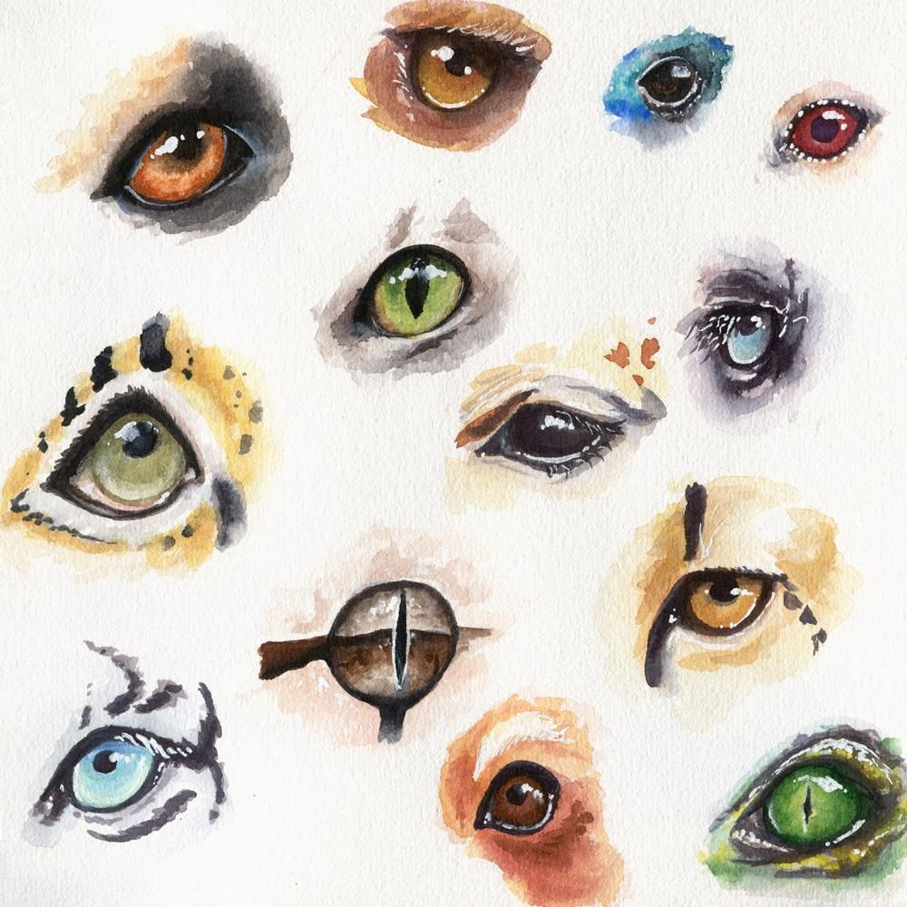 My Animal Eyes - image 6 - student project