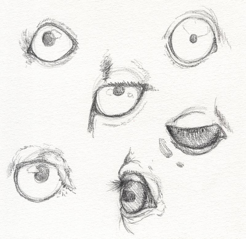 My Animal Eyes - image 1 - student project