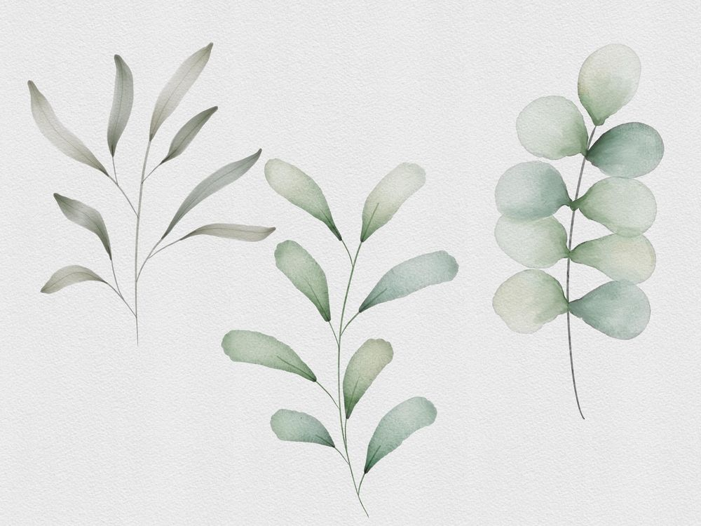 Botanical Watercolors - image 1 - student project