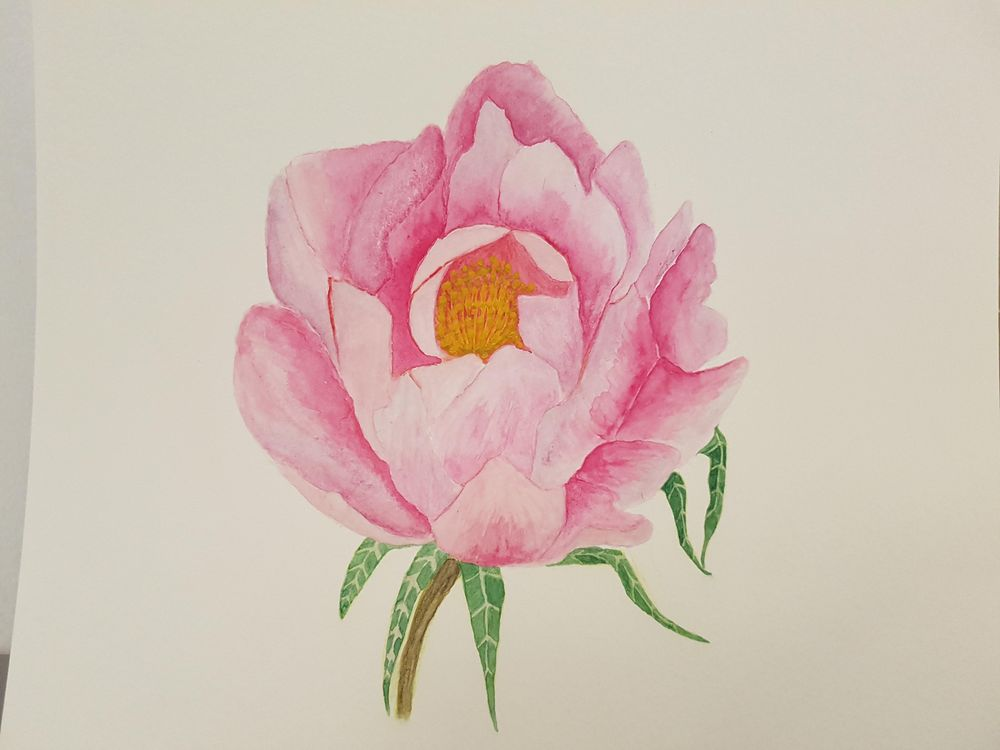 My first peonies - image 1 - student project
