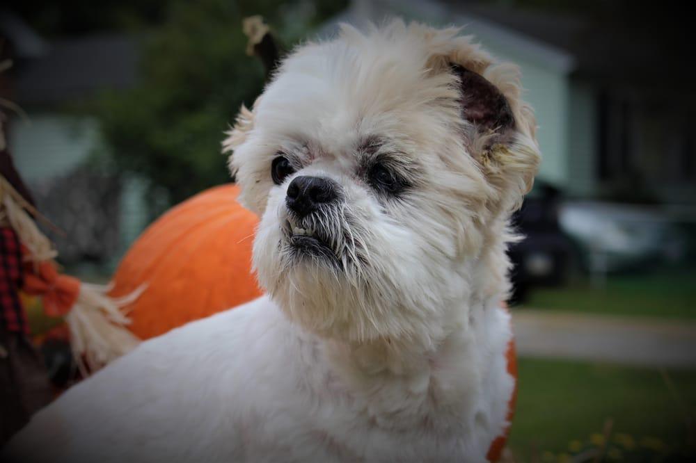Pet Photos - image 1 - student project