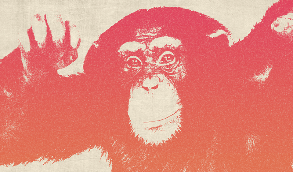 Funky Monkey - image 4 - student project