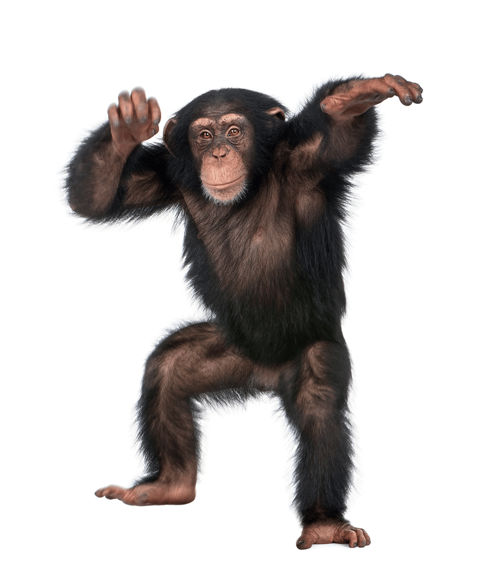 Funky Monkey - image 2 - student project
