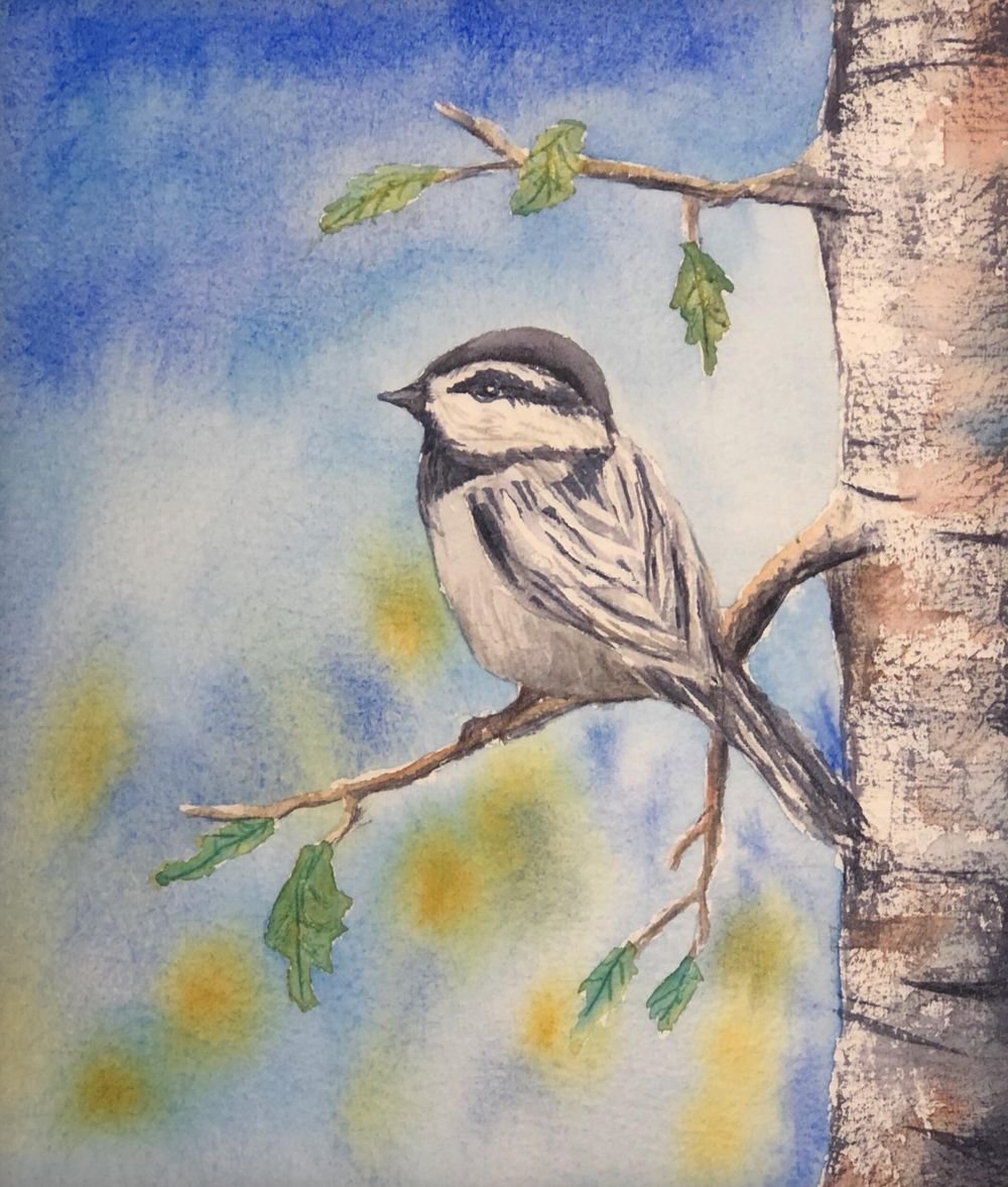 Watercolor Mountain Chickadee - image 1 - student project